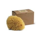 Baudelaire Genuine Caribbean Wool Sea Sponge