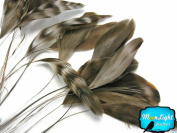 1 Dozen - NATURAL Chincilla Stripped Coque Tail Feathers