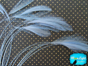 Roster Feathers - 1 Dozen Blue Stripped Rooster Hackle Feather, Moonlight Feather