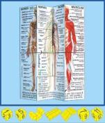 Human Body Cube