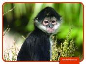 EDUPRESS Rain Forest Science Reading Comprehension Cards