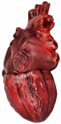 Simulated Body Parts ~ Heart (1/pkg) Pkg/12