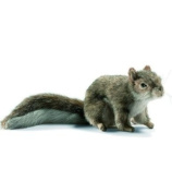 Grey Squirrel, Sitting