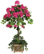 Bougainvillaea Topiary with Wood Box