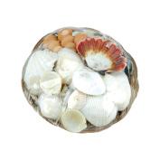 Sea Shell Basket 15cm -Natural