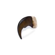 Resin Bear Claw 5.1cm 1/Pkg-