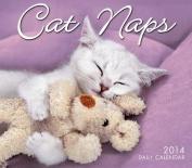 2014 Cat Naps
