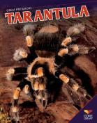 Tarantula (Great Predators)