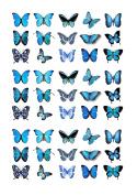45x Blue Butterflies Edible Cake Toppers