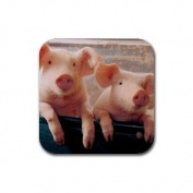 Pigs Rubber Square Coaster set (4 pack) Great Gift Idea