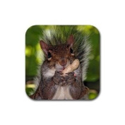 Squirrel Nuts Rubber Square Coaster set (4 pack) Great Gift Idea