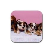 Cute English bulldog puppies Rubber Square Coaster set (4 pack) Great Gift Idea