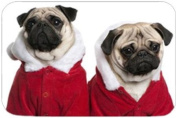 2 Pug Dogs with Christmas Outfits Holiday Cutting Board
