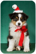 Aussie Australian Shepherd Puppy Dog with Christmas Hat Holiday Cutting Board