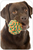 Chocolate Labrador Retriever with Toy Tempered Cutting Board