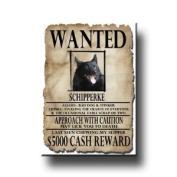 Schipperke Wanted Fridge Magnet