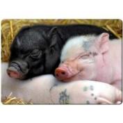Baby pigs sleeping fridge magnet