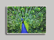 Peacock Pride Refrigerator Magnet
