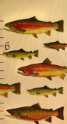 147.3cm Tall North American Trout Wooden Growth Chart