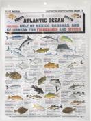 Fishermans Saltwater Fish Chart #5
