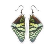 Real Moth Wing Earrings - Sunset Moth Top Wing - Cruelty Free Butterfly Jewellery