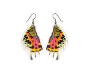 Real Moth Wing Earrings - Sunset Moth Bottom Wing