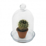 Achla BJT-01 Bell Jar Terrarium I - Glass