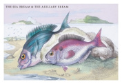 Buy Enlarge 0-587-09290-4P20x30 Sea Bream and the Axillary Bream- Paper Size P20x30