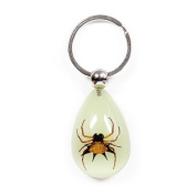 Ed Speldy East YK601 Real Bug Key Chain-Tear Drop Shape-Glow in the Dark-Spiny Spider