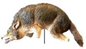 Bird X COYOTE-3D Lifelike Full-Size Predator 3D Coyote