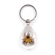 Ed Speldy East SK601 Real Bug Key Chain-Tear Drop Shape-Clear-Spiny Spider