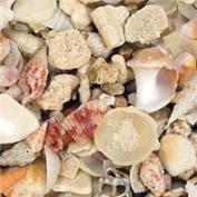 Caribsea 013123 Seaflor Aruba Shell