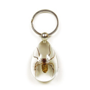 Ed Speldy East SK610 Real Bug Key Chain-Tear Drop Shape-Clear-Spider