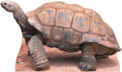 Advanced Graphics 58 Tortoise Life Size Cardboard Standup