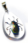 Ed Speldy East SD1103 Real Bug Necklace-Shining Beetle