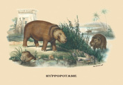 Buy Enlarge 0-587-08897-4P20x30 Hyppopotame - Hippopotamus- Paper Size P20x30