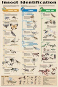 Olympia Sports 16333 Insects Identification Poster