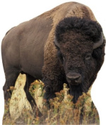 Advanced Graphics 59 Bison Life Size Cardboard Standup