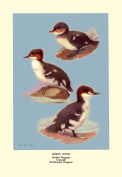 Buy Enlarge 0-587-08887-7P20x30 Three Downy Young Ducks- Paper Size P20x30