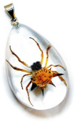 Ed Speldy East SD1102 Real Bug Necklace-Spiny Spider