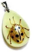 Ed Speldy East YD1101 Real Bug Necklace-Black & White Leaf Beetle