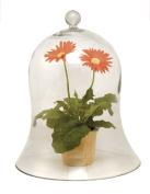 Achla VBJ-03 Bell Jar Garden Planter - Clear