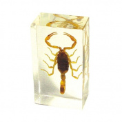 Ed Speldy East PW211 Real Bug Paperweight Regular-Medium-Scorpion-