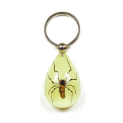 Ed Speldy East YK610 Real Bug Key Chain-Tear Drop Shape-Glow in the Dark-Spider