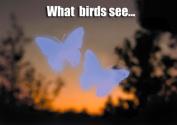 Window Alert WINDA3 Bird Safety Window Decals - Butterfly
