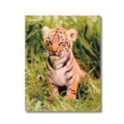 Baby Zoosters Portfolio