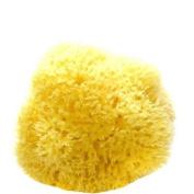 8.9cm - 10cm Medium Natural Sponge