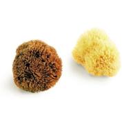 "Natural Sea Sponge, Exfoliating Bahamas Grass Sponge 8.5cm / 3.5"""