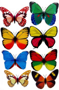 Real Butterfly Magnets 12cm, Colourful Real Looking Butterflies Many Variations x4 Lot