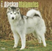 Alaskan Malamutes 2014 Wall Calendar